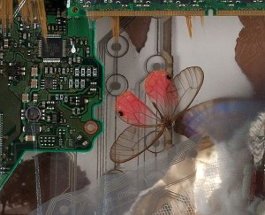 The-Oracle-20x15-butterfly-detail