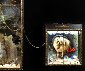 Duchess's dog